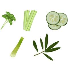 Greens vector image