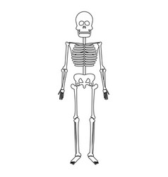 skeleton human bones skull medicine line vector image vector image