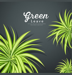 Pandanus tree green leaves background vector