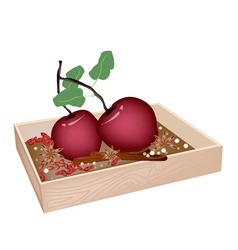 Christmas apples and spices in wooden container vector