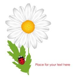 chamomile with ladybird vector image