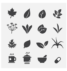 Herb icon vector