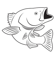 Sriped Bass fish vector image