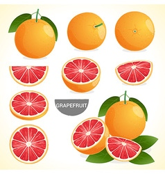 Fruit set of grapefruit in various styles format vector