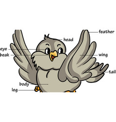 Cartoon bird vector image vector image