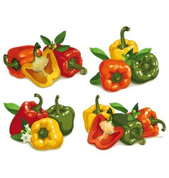 Capsicum peppers vector image vector image