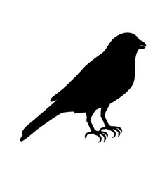 Canary flat design vector