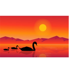 At sunset swan scenery on lake silhouettes vector