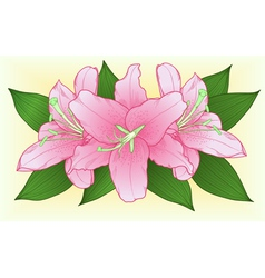 bouquet of pink roses with green leaves vector image vector image