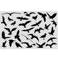 set of birds silhouettes isolated vector image vector image