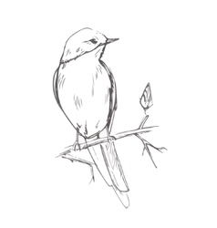 Bird pencil grey sketch vector image