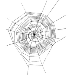 hand drawn spiderweb vector image