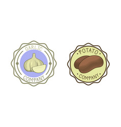 Garlic and potato badge vector