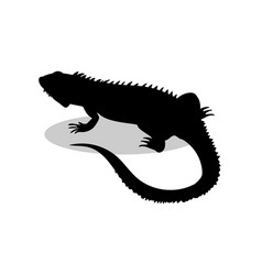 iguana lizard reptile black silhouette animal vector image