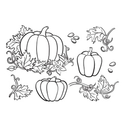 Pumpkin drawing set isolated outline vector