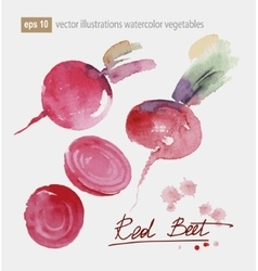 Red beet set watercolor vector