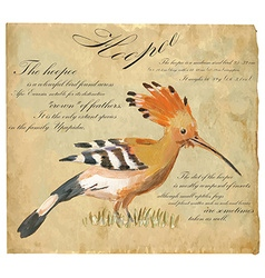 Hoopoe - an hand painted vector