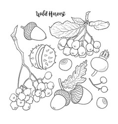 Black and white autumn fall fruits and berries vector