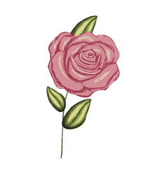 Colorful realistic flowered rose with leaves and vector