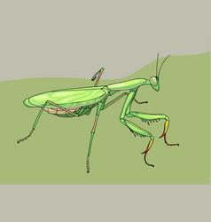 praying mantis hand drawn vector image