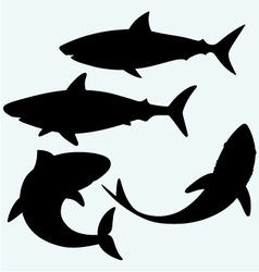 Set shark vector image
