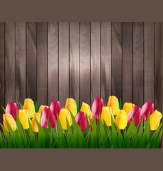 nature spring background with colorful tulips on vector image