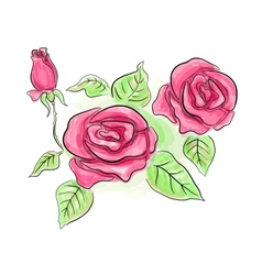 Sketch of pink roses in transparent colors vector image