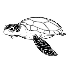Sea turtle animal cartoon on white background vector