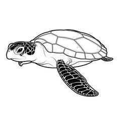 sea turtle animal cartoon on white background vector image vector image