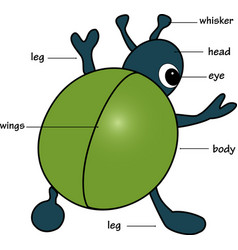 Cartoon bug vector image vector image