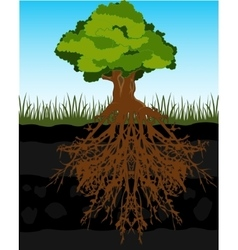 Tree and root in ground vector
