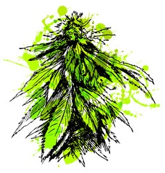 Colored hand sketch of marijuana vector image