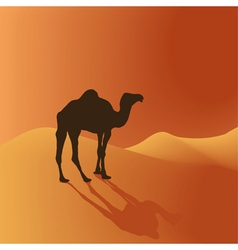 camel in the desert vector image