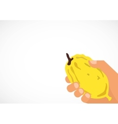 Hand holding a citron etrog in hebrew vector