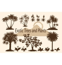 Palm Trees Flowers and Grass Silhouettes vector image