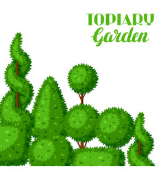 Boxwood topiary garden plants background with vector