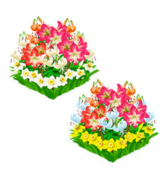 two beautiful flower beds isolated vector image
