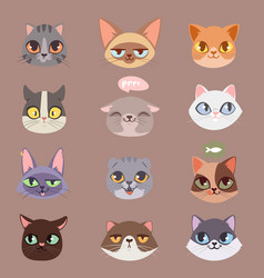 cats heads vector image vector image