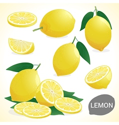 Fruit Set of lemon in various styles vector image