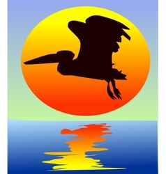 Pelican on sunset vector