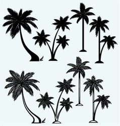 Silhouette of palm trees vector image