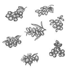 Sketch doodle hand-drawn set different berries vector image