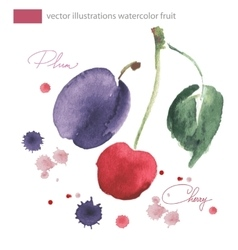 watercolor image cherrie and plu with vector image vector image