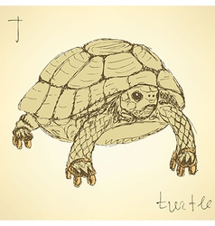 Sketch fancy turtle in vintage style vector