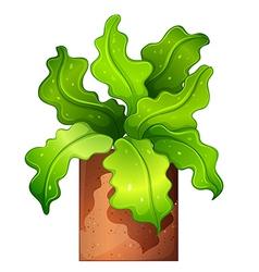 A houseplant in a pot vector