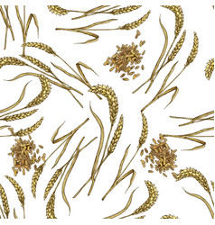 wheat with grain seamless botanical pattern vector image vector image
