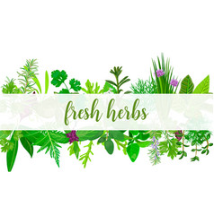 fresh realistic herbs and flowers with text vector image vector image
