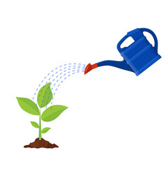 young plant with watering can vector image vector image
