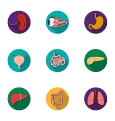 Human organs set icons in flat style big vector