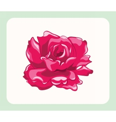 Bright roses isolated vector